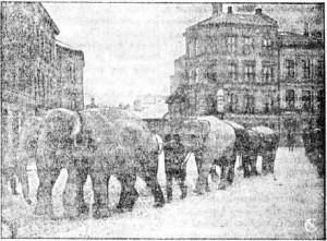 elefanter 1916